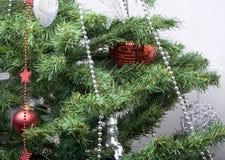 Xmas time. Christmas tree royalty free stock photo