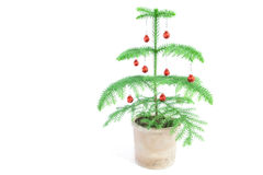 Xmas tree. Studio shot of an isolated miniature christmas tree Royalty Free Stock Images