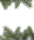 Xmas tree royalty free stock photo