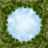 Xmas Trees Background Stock Photo