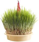 Xmas Wheat Cutout Stock Image