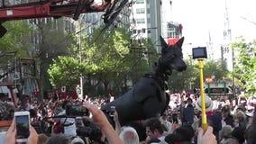 XOLO гигантская собака ` s находилось в Монреале, Квебеке сток-видео