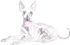 Dog breed Xolo drawn in graphic style in illustrator royalty free illustration