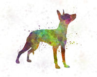 Xoloitzcuintle in watercolor Royalty Free Stock Photos