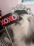 XOXO royalty free stock image