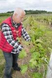 Xpressive vine grower working in vineyard Royalty Free Stock Photo
