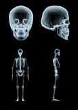 Xray. 3d rendered xray skeleton and skull in different views Royalty Free Stock Image