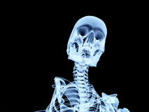 Xray Bone 3. An image of an xray of a skeleton, a good Halloween or possible medical based image Royalty Free Stock Images