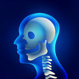 Xray. Of head and neck, the joints and bones of human, skeletal spinal bone structure of Human Spine, vector of medical health care Royalty Free Stock Image