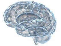 Xray human brain. Human brain x-ray, over white background Stock Photography