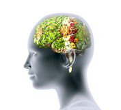 Xray of human head with fruit and vegetables for brain. Stock Image