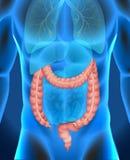 Xray of human's large intestine Royalty Free Stock Photo
