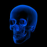 Xray of human Skull / Head Royalty Free Stock Photos