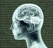 Xray image of human head with binairy code and a brain Stock Photo