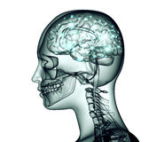 Xray image of human head with brain and electric pulses Stock Photos