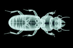 Xray image of an insect isolated on black with clipping path,, 3 Royalty Free Stock Photos