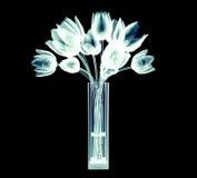 Xray image of tulip flowers  on black Stock Photos