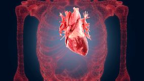 Xray scan internal orans - heart Royalty Free Stock Images
