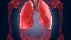 Xray scan internal orans - lungs Stock Photo