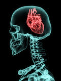Xray of skull with heart. Xray of skull with heart instead of brain Royalty Free Stock Images