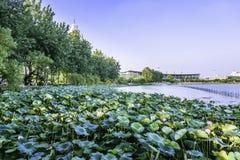 Xuanwu Lake Lotus and Nanjing railway station royalty free stock photography