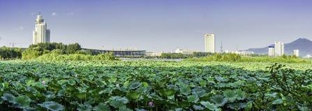 Xuanwu Lake Lotus and Nanjing railway station royalty free stock image