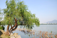 Xuanwu Lake park scenery Royalty Free Stock Photography