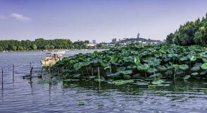 Xuanwu Lake scenic spot stock photos