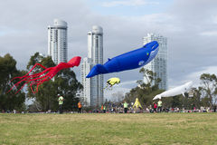 XV Kites Festival Rosario Royalty Free Stock Photos
