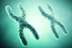 XX Chromosome in the foreground, a scientific concept. 3d illustration Royalty Free Stock Photos
