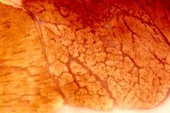 xxl ткани мышцы closep Стоковое Изображение