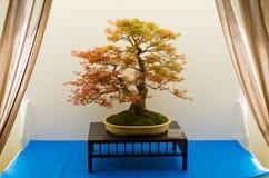 XXVIII kwiat i sztuka festiwal w Ksiaz kasztelu Obrazy Royalty Free