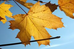 xxxl размера листьев изображения осени Стоковые Изображения