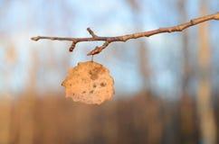 xxxl размера листьев изображения осени Стоковые Фотографии RF