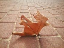 xxxl размера листьев изображения осени Стоковые Изображения RF