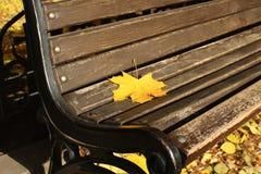 xxxl размера листьев изображения осени Стоковое Изображение RF