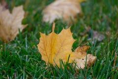xxxl размера листьев изображения осени бесплатная иллюстрация