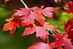 xxxl размера листьев изображения осени Стоковое Изображение
