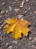 μέγεθος φύλλων εικόνας φθινοπώρου xxxl Στοκ Εικόνα