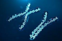 XY-kromosomer med DNA:t som bär genetiska koden Genetikbegrepp, medicinbegrepp Framtid genetiska mutationer vektor illustrationer