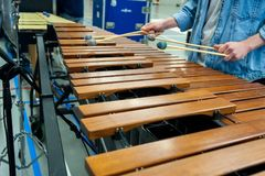 Xylophone, marimba or mallet player with sticks,. Musician in action with percussion instrument during a concert or performance Royalty Free Stock Image