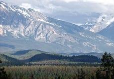 Y águila y montañas Imagen de archivo