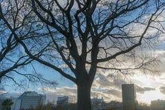 Y-Baum, der die Stadt von Lissabon übersieht portugal lizenzfreie stockfotografie