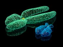 Y and X chromosomes. 3d render illustration of X and Y chromosomes royalty free illustration