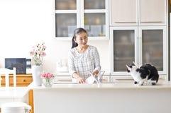 Y gato femenino del animal doméstico Fotografía de archivo