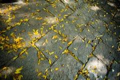 Y hojas del amarillo Foto de archivo libre de regalías