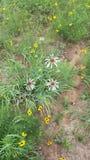 ¡Y los wildflowers de la primavera apenas guardan el florecer! Imágenes de archivo libres de regalías
