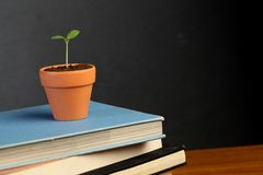 Y oung plant on stack of books Royalty Free Stock Photos