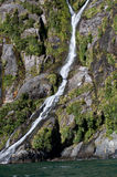 Y shape waterfall at New Zealand Stock Images
