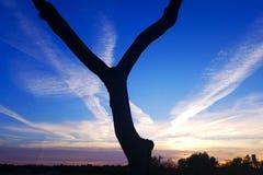 Y-trädet Royaltyfria Foton